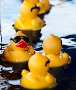 duckies at dawn